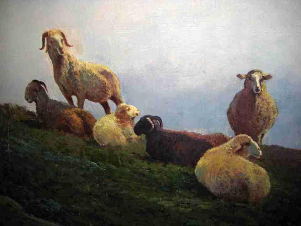 paesaggio con pecore