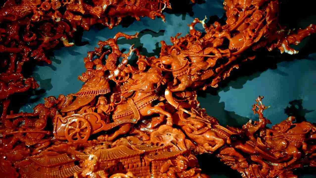 Corallo rosso cinese 6