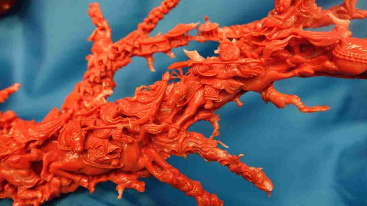 Corallo rosso cinese 8