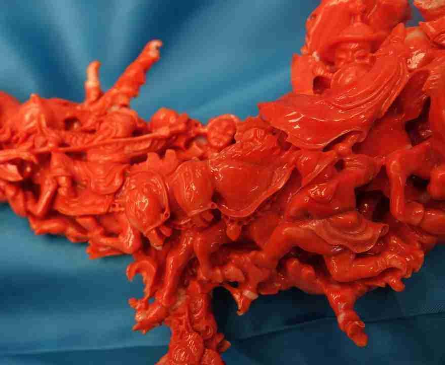 Corallo rosso cinese 9